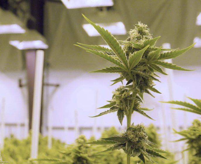 Michigan Marijuana Law